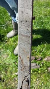 Klei met zandlaagjes en verslagen organische resten in de restgeul bij Linschoten.